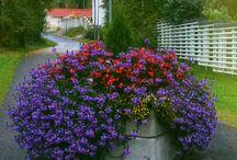 Kesän kukkaset / Kesän kukkasia