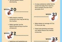 pregnancy information