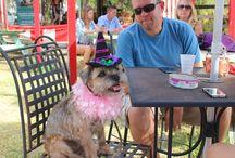 Sarasota Dog Events