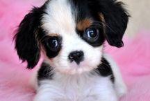 ❤Puppies I want❤ / My Dream Puppies