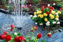 blomster og haveideer