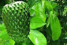 cura pelas plantas!!