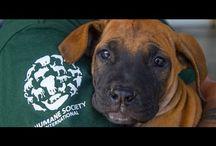 Animal Welfare - All Lives Matter