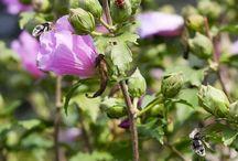 Use Organic Pesticides