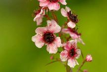 Flower 〆**
