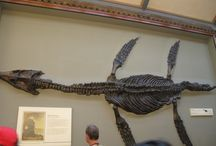 Marine Reptiles / Pictures, articles and information about extinct marine reptiles.