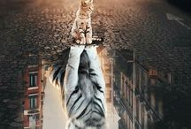 Tigers and kitty