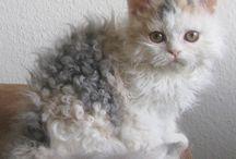 Kedicikler / Şirinlik