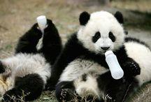 Cute furbabies