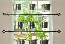 Herbs and veg