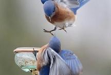 living birds