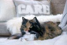 katt cat pet