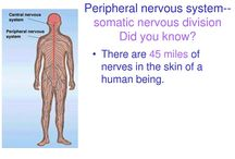Peripheral Neuropathy / by Pain Stop Clinics