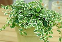 Indoor low light plants