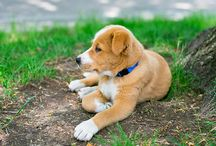 Smart Pet Care / Any pet owner knows a pet is more than an animal. A pet is part of your family. Taking care of your pets is important and we've got pet care tips to help your pet integrate with your smart home.