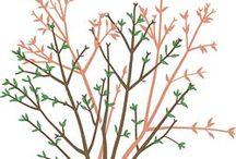 Pflanzen und Pflege / Alles rund um Pflanzen und Pflege und tolle Bilder zu Bluen udn Pflanzen