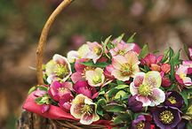 Flowers / by Belinda Roussel