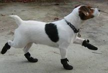 Dogs Wearing Boots / Winter can be a real challenge for dogs! Take a look at our awesome collection of the Stylish dogs wearing booties  for small and medium sized breeds you'll find! Simply head over to www.dogbootsworld.com !