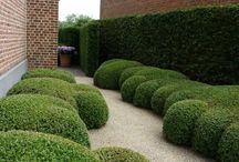 HEDGE | TOPIARY