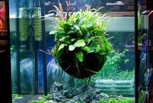 Aquarium DIY / by That Fish Place - That Pet Place