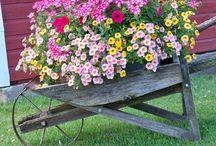 Цветы и декор