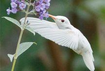 •♥✿♥• Hummingbirds  •♥✿♥•