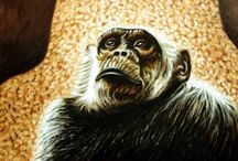 Dan Civa Monkey portraits