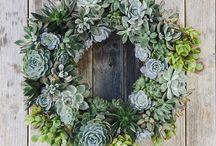 Déco plantes / Succulentes