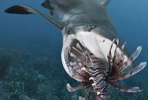 devorador aquatico