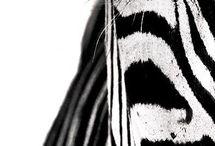 zwart - wit ⚫⚪