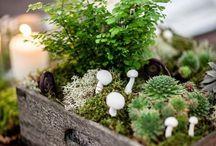 Mushroom wedding