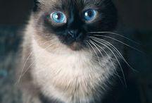 Animals:)