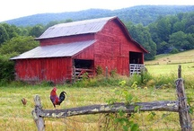 Barns / by Wendy Blackwood