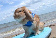 Cute kick carrot rabbit