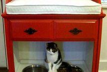cat & pet stuff