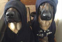 Мемы с собаками