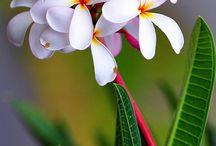 Virágok ès Kert