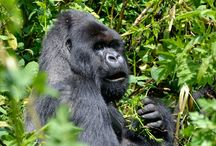 14 days / Kibale National Park, Rwenzori Mountains and Queen Elizabeth National Park