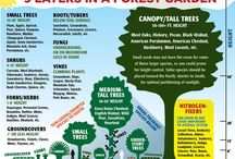 Forest gardening / Growing trees, herbs, ground covers, vines, tubers, fungi, shrubs, aquatics in a forest-y environment...