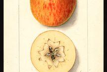 meyve çizimleri