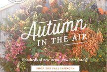 inspiration: falling into autumn