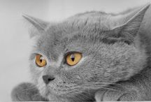 Cats / Beautiful or cute looking cats
