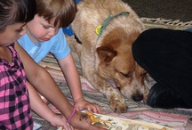 Pets Love Libraries and Books Too! / Pins of dogs, cats, and other pets that live in libraries or participate in library programming.
