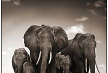 Nick Brandt Photography / In The Wild Photography