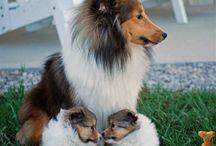 doggies puppies
