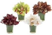 Cymbidium Celebration - Wedding / Cymbidiums are a great flower for celebrations and weddings,  available from South-Africa from June until October (from AFG-Worldwide)
