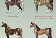 My favorite horses  / Gorgeous Horses & Breeds / by Alondra