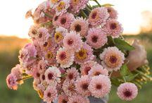 Blomsterbedet