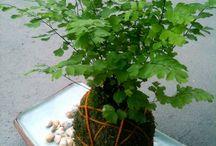 Vasos de KOKEDAMAS::qualquer planta
