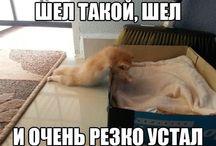 Приколы с котиками